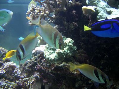 fisk og akvarium